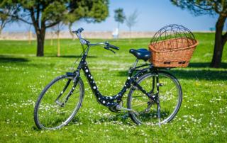 Location vélos avec panier pour chien
